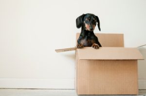 When packing, the essential things to know are how and when to start doing it. This guide will make packing less tedious and more enjoyable.